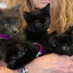 Black Little Kittens